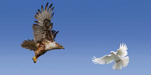 Inflation or deflation? We pit hawks against doves