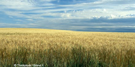 Is it time to harvest income from agricultural land?