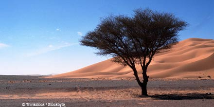 Is Jeremy Grantham right? How to navigate the beta desert