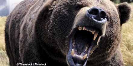 Bear market alert: five critical signs