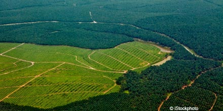 David Kempton: neglected palm oil companies get my cash