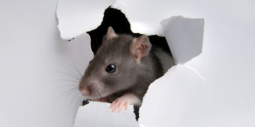 'A rat ate my tax return': 10 terrible excuses sent to HMRC