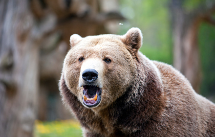 Accumulator: grizzly gilts bear good and bad news