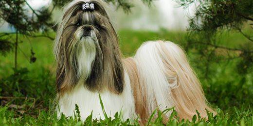 From Shih Tzus to the Caribbean: 10 strange tax return claims
