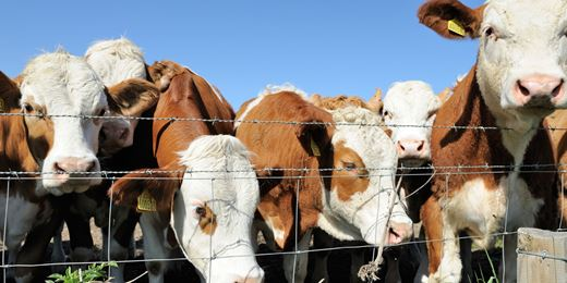 WM Survey: herding still rule as allocators all love Europe